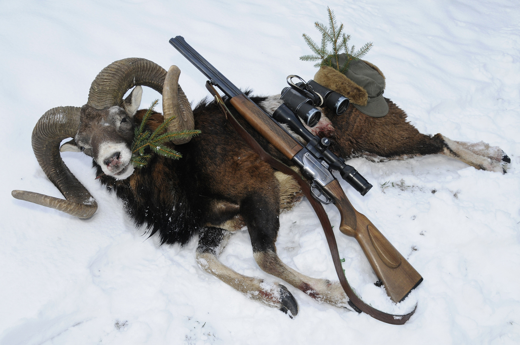 Mouflon hunting trophy with gun on snow