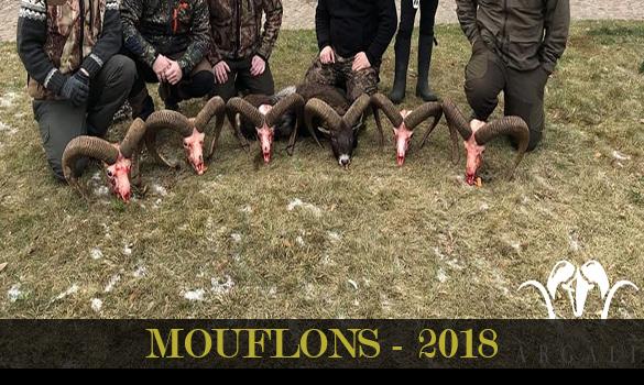 gallery-mouflons-2018-thubnail