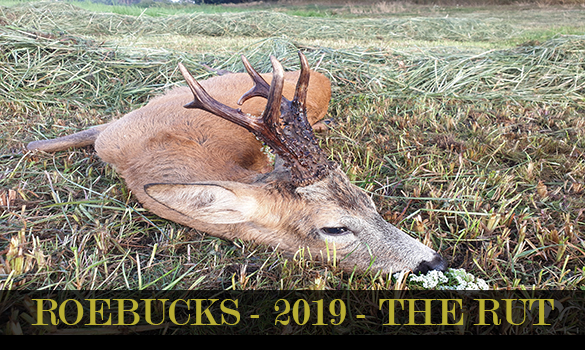 gallery-roebucks-2019-THE_RUT-thubnail